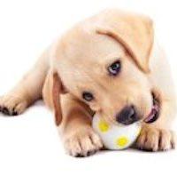 choisir-jouet-chien 2